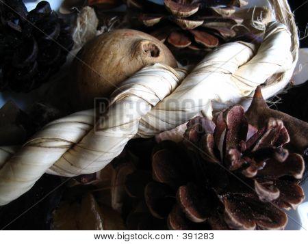 Acorns And Botanicals