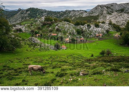 The Rural Landscape Of Asturias, Spain. Green Meadow With Small Cottages In Picos De Europa National