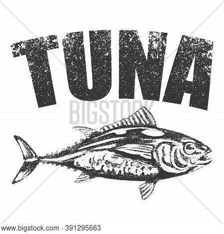 Vector Hand Drawn Tuna Sketch. Sea Food Fish Drawing Illustration. Engraved Isolated On White Backgr