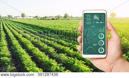 The Farmer Holds A Phone And Receives Information Parameters And Data From Agricultural Field. Advan