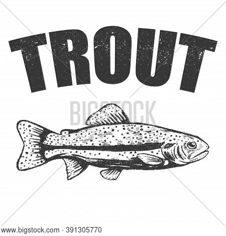 Vector Hand Drawn Trout Sketch. Sea Food Fish Drawing Illustration. Engraved Isolated On White Backg