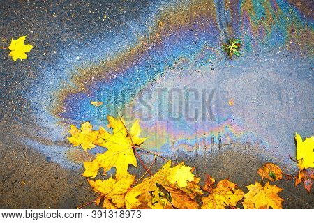 An Oil Slick On The Asphalt, In A Puddle Of Floating Maple Leaves