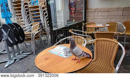 Brussels, Belgium  - May 13, 2018: In The Absence Of Tourists, The Pigeon Walks On The Table Of A St