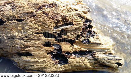 Wet Crumbling Wood Close-up. A Wooden Surface That Is In The Water For A Long Time. Woody Balance Fl