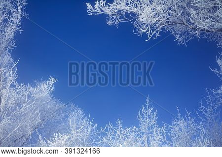 Frosty Branches Of The Winter Trees Against The Blue Sky. Winter Background - Frosty Tree Branches F