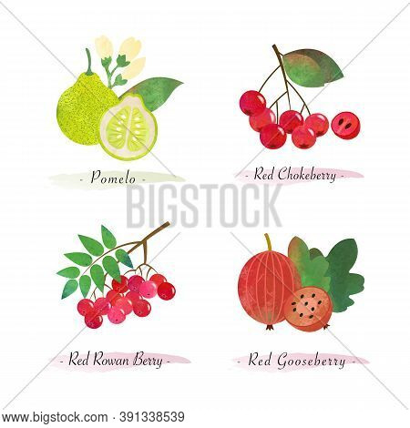 Organic Nature Healthy Food Fruit Pomelo Red Chokeberry Red Rowan Berry Red Gooseberry