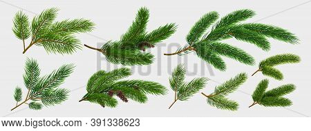 Fir Branches. Realistic Pine Tree Christmas Decorative Elements Isolated On White Background Collect