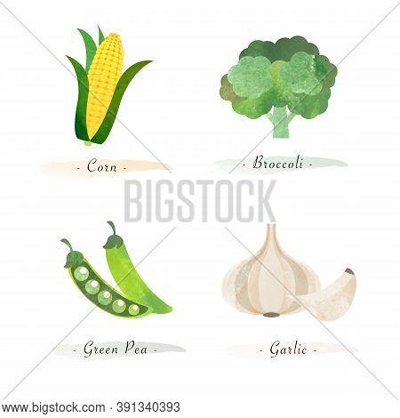 Watercolor Healthy Nature Organic Plant Vegetable Food Ingredient Corn Brocoli Green Pea Garlic