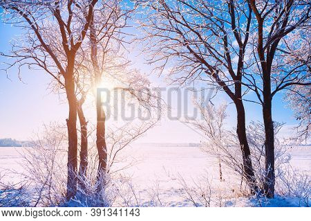 Trees In Hoarfrost Against The Blue Sky In Winter Sunny Day. Beautiful Winter Landscape.