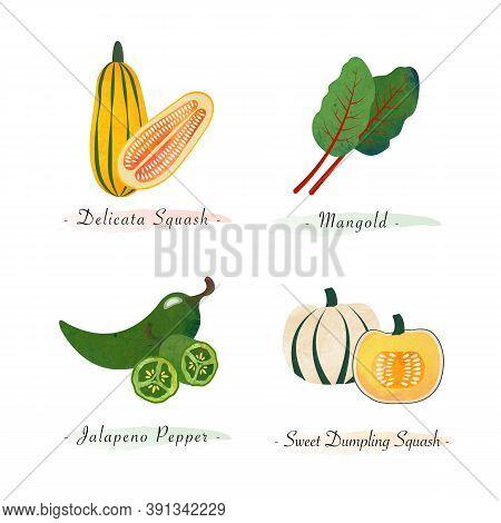 Watercolor Healthy Nature Organic Plant Vegetable Food Ingredient Delicata Squash Mangold Jalapeno P