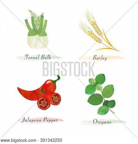 Watercolor Healthy Nature Organic Plant Vegetable Food Ingredient Fennel Bulb Barley Jalapeno Pepper