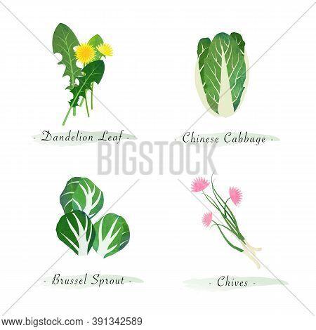 Watercolor Healthy Nature Organic Plant Vegetable Food Ingredient Dandelion Leaf Chinese Cabbage Bru