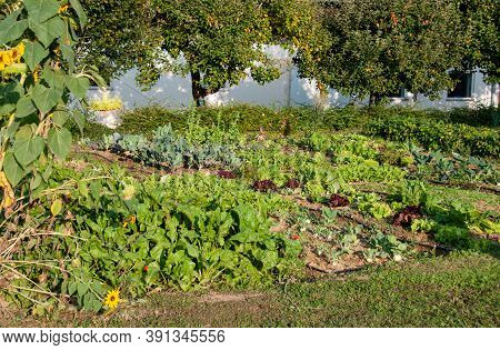 A Kitchen Garden In German Countryside With Vegetables And Fruit Trees