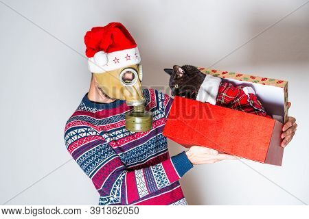Man In Christmas Sweater With Christmas Hat Looking At His New Black Cat In Christmas Box