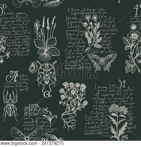 Seamless Pattern With Hand-drawn Medicinal Herbs, Beetles, Butterflies And Handwritten Text Lorem Ip