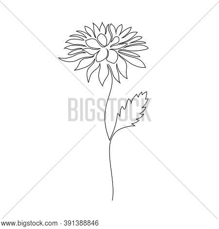 Chrysanthemum Flower On White Background. One Line Drawing Style.