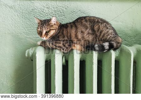 Cold Winter. Problems With Heating . Cat Heating On The Battery. Tabby Cat Relaxing On A Warm Radiat