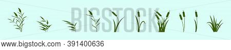 Set Of Reeds In Grass Cartoon Icon Design Template With Various Models. Vector Illustration Isolated