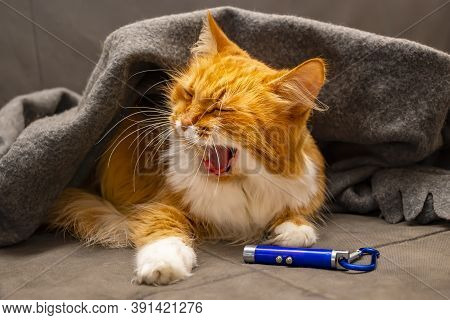 Red Siberian Fluffy Cat Yawns And Lies On The Sofa Under A Warm Blanket, Coverlet, Next To A Toy, A