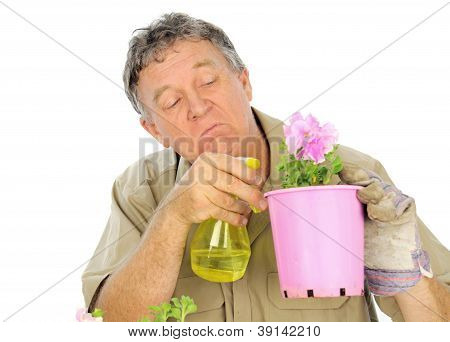 Fussy and careful middle aged gardener sprays a plant in a pot. poster