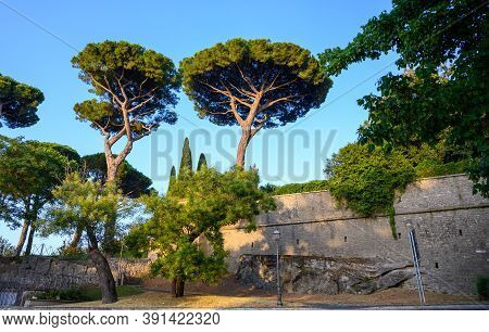 Green Pine Trees In Castel Gandolfo, Summer Residence Of The Pope, Located On Alban Hills Near Lake