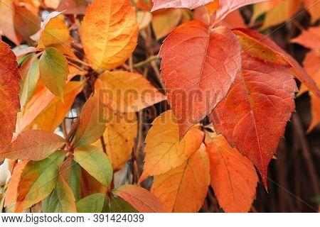 Group Of Autumn Leaves. Fall, Seasonal Background