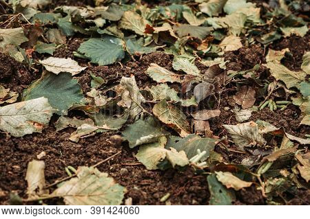 Wet Autumn Leaves On The Ground. Fall Vibes, Background