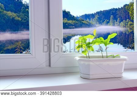 Young Plants Of Oaks On Window-sill And View To Morming Mist Above Forest Lake. Young Trees Are Read