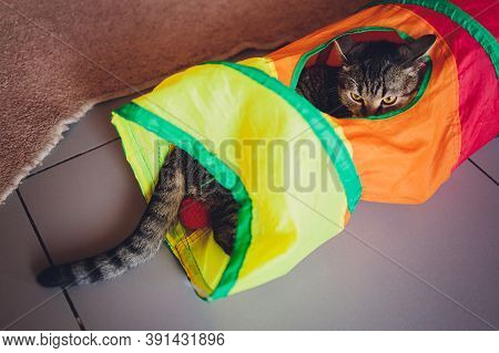 Calico Cat Framed And Alert In Cat Tunnel Toy.