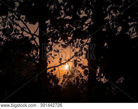 Orange Sunrise Through The Branches Of Trees In The Fog. Orange Sunny Sunset Over The Horizon. Morni