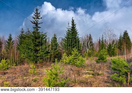 Early Spring In The Forest. Forest Meadow Field Landscape. Early Spring Forest Meadow View. Forest M