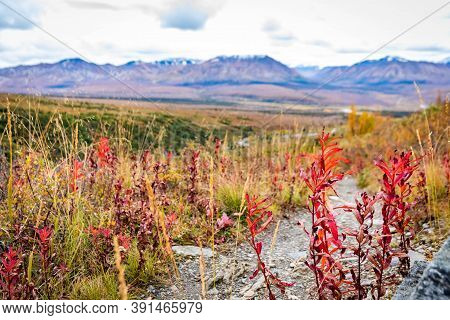 Savage Alpine Trail Mountains View From Denali National Park
