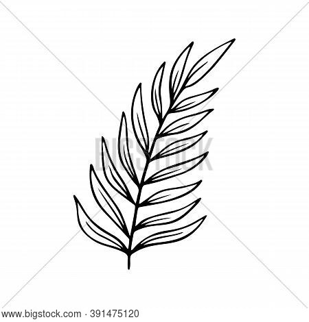 Areca Palm Leaf Stylized Vector Illustration. Exotic Tree Branches In Doodle Style. Jungle Foliage D
