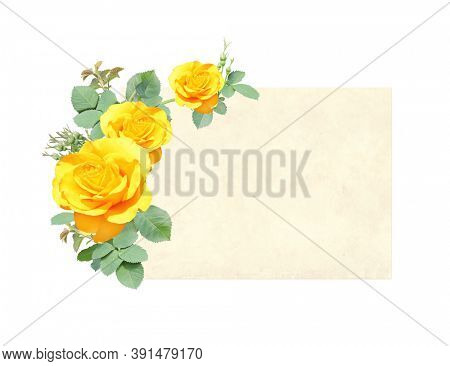Horizontal retro card with branch of Climbing rose with yellow flowers. Vintage banner with roses. Isolated on white background. Mock up template. Copy space for text