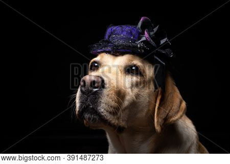 Close-up Of A Labrador Retriever Dog In A Headdress.