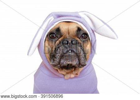 Portrait Of Cute French Bulldog Dog Dressed Up In Funny Light Violet Easter Bunny Costume With Ears