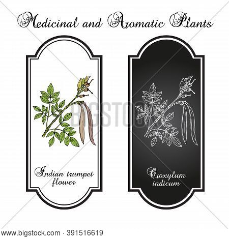 Midnight Horror, Or Indian Trumpet Flower, Broken Bones, Tree Of Damocles Oroxylum Indicum , Medicin
