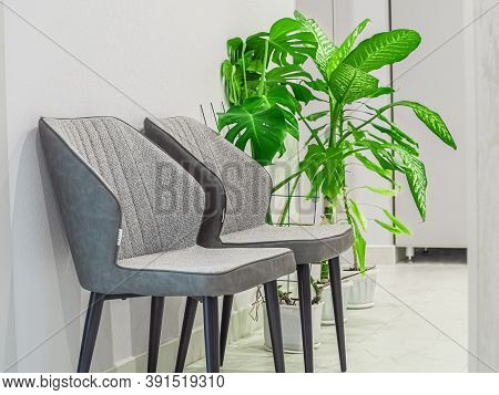 Two Empty Gray Designer Chairs With Green Houseplant In A Medical Waiting Room In A White Clinic Int
