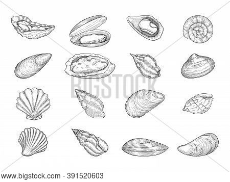 Oyster. Seafood Gourmet Products Natural Fresh Shells Vector Doodle Collection. Sea Menu Oyster, Coo