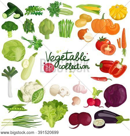 Vegetables And Herbs Collection With Potato, Corn, Beet, Eggplant, Broccoli, Arugula, Leek And Lettu