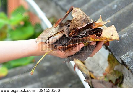 Gutter Maintenance: A Man Is Removing Leaves From A Blocked Rain Gutter As A Way To Keep The Gutters