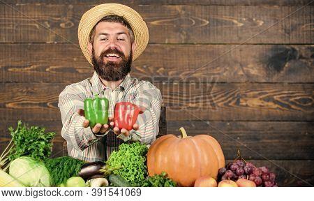 Homegrown Harvest Concept. Typical Farmer Guy. Farm Market Harvest Festival. Sell Vegetables. Man Ma