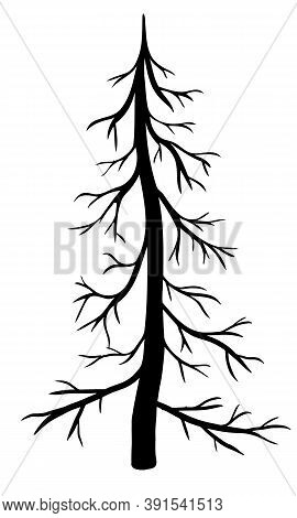 Vector Bare Fir Tree Isolated On White Background