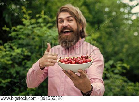 Green Healthy Food. Fresh Red Sour Cherries Harvest In Plate. Seasonal Cherry Harvest In Industrial