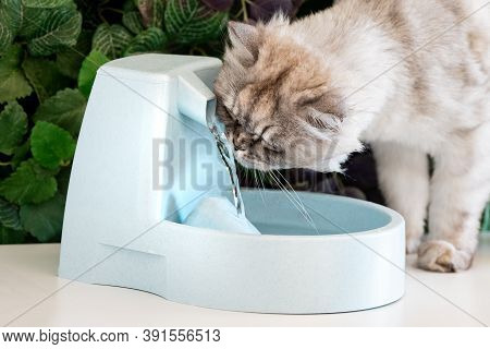Gray Cat Drinks Clean Water From Water Dispenser. Cat Water Fountain. Pet Thirst. Dehydration In A C