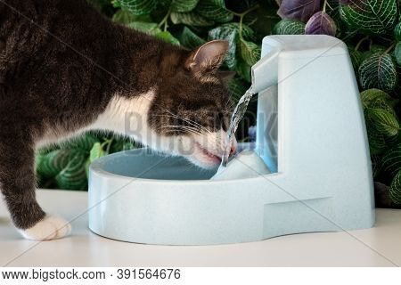 Cat Drinks Clean Water From Water Dispenser. Cat Water Fountain. Pet Thirst. Dehydration In A Cat.
