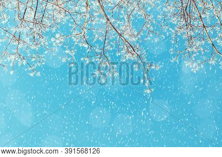 Winter landscape - winter snowy branches of the winter tree on the background of the sunny sky under winter snowfall. Winter nature background, winter forest trees. Winter forest nature, winter landscape