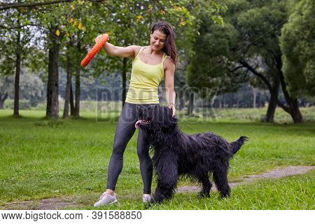Woman Trains Briard On Glade In Park.