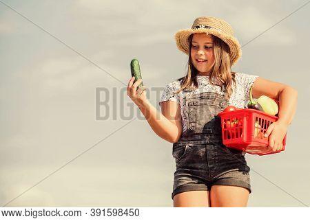Homegrown Veggies. Organic Food. Sunny Day At Farm. Crops Harvest. Vegetables In Basket. Girl Adorab