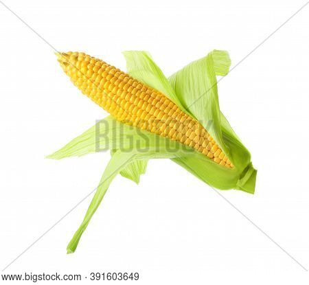 Ripe Raw Corn Cob With Husk Isolated On White